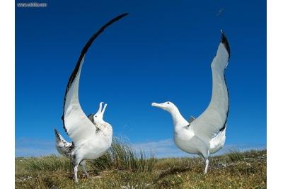 Tour y crucero con albatros y pingüinos