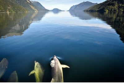 Tour al Doubtful Sound