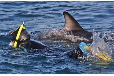 Nadar con delfines